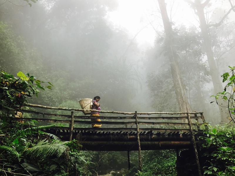 Dans la brume de Darjeeling