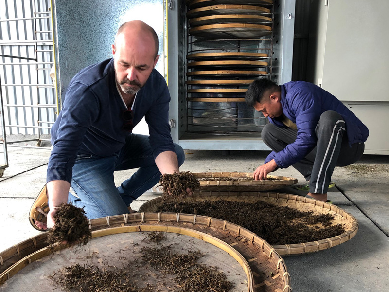 Arnaud et M. Menh travailant les feuilles de thé
