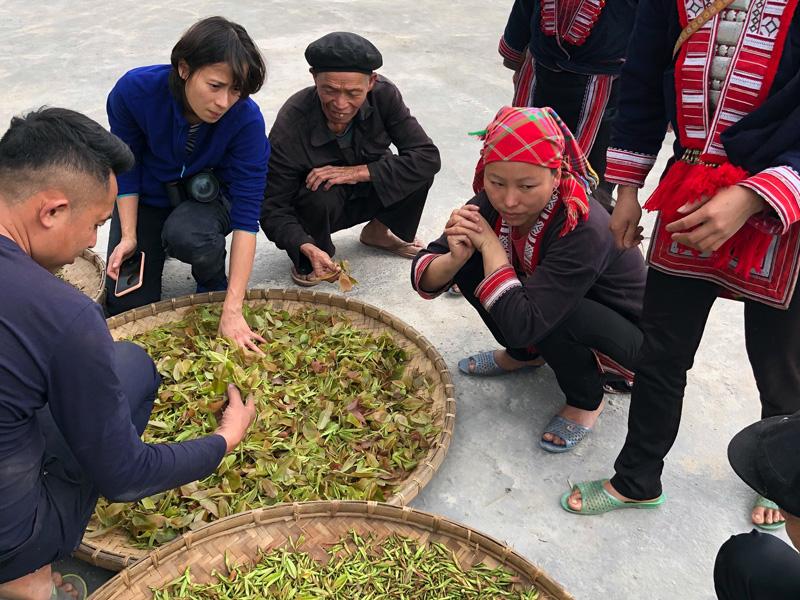 Réception des récoltes de thé - Vietnam