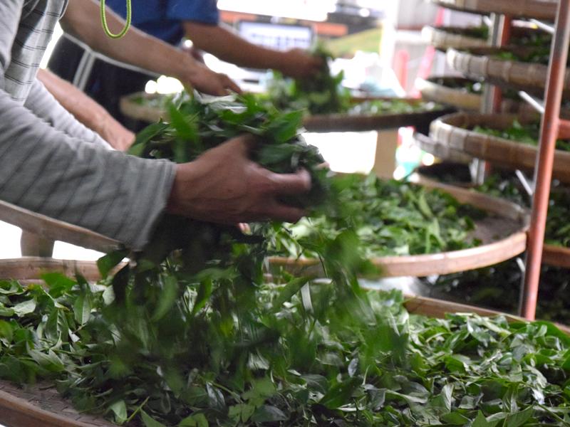 Brassage des feuilles de thé