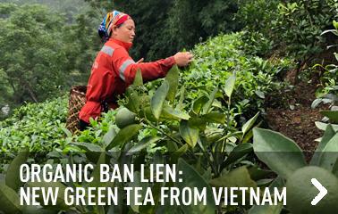 New plain green tea