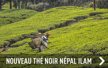 Nouveau thé noir du Népal
