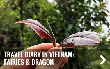 Travel diary in Vietnam: fairies and dragon